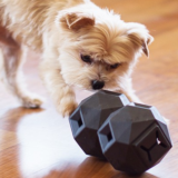 Shop For The High Quality Pet Supplies Online