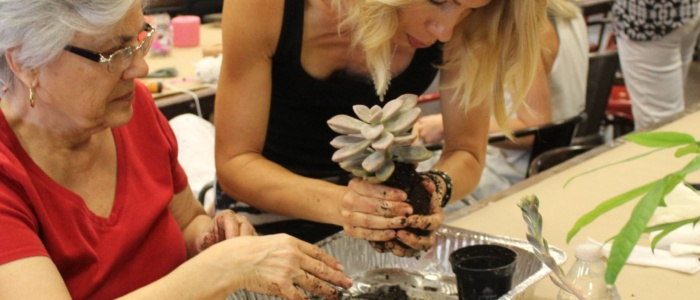 Eyes Here – Benefits of using Terrarium as Home Decors